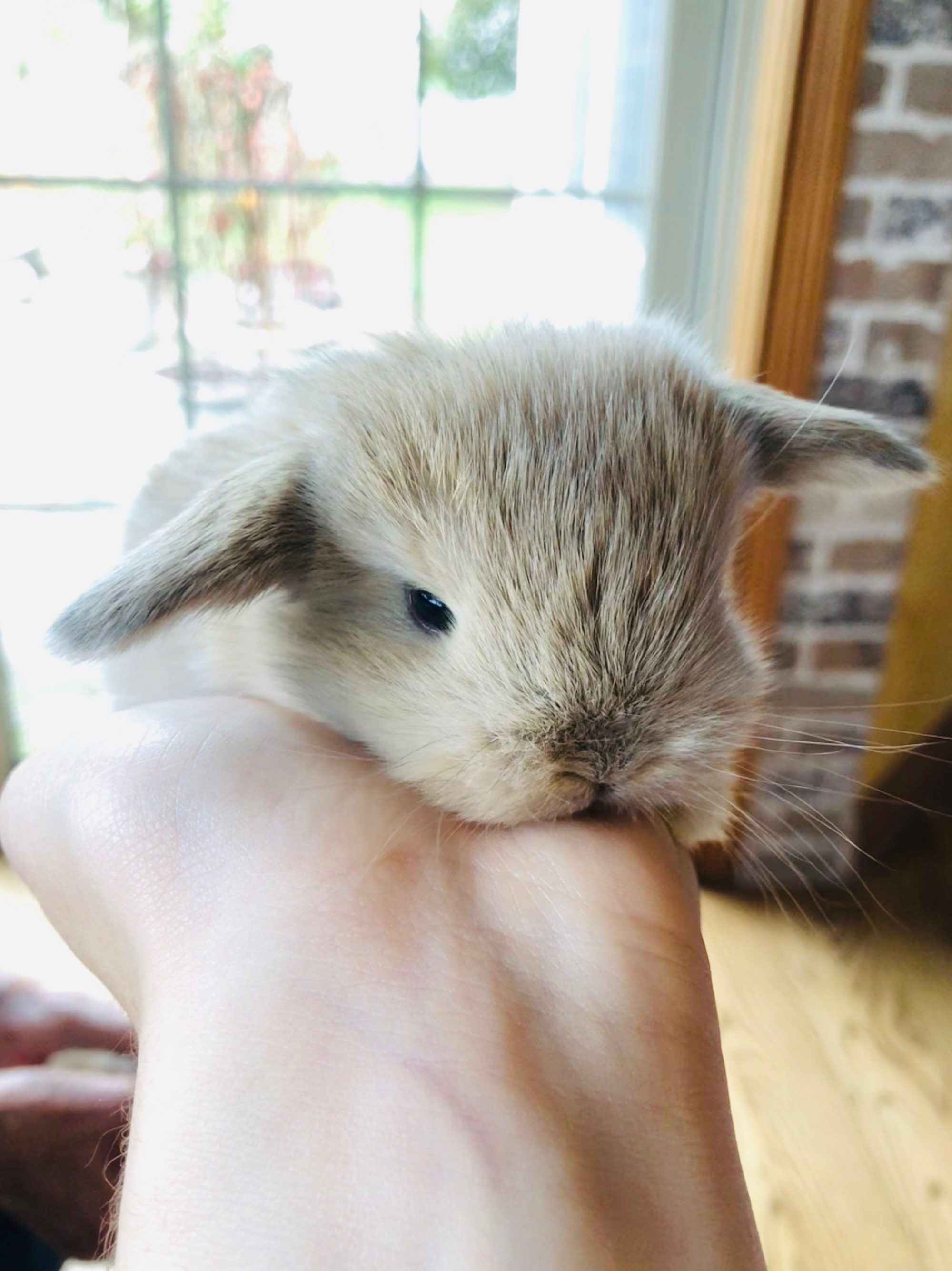 Hunny Bunny Rabbitry Wisconsin LLC